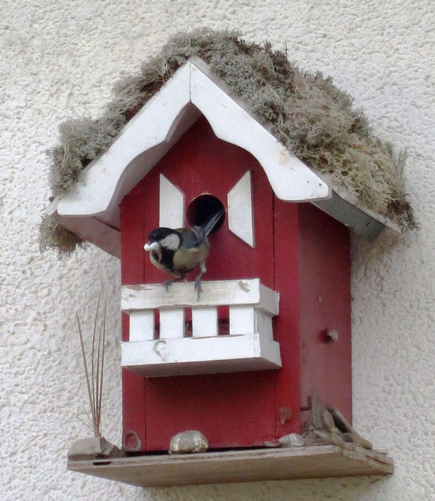 Maisenkasten Strandhaus Vogelhaus