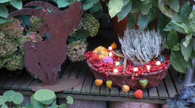 Herbstgesteck für Terrasse : mit Kürbis , Laminions Blüten und Hargebutten